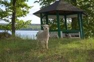 Ett av våra söta lamm